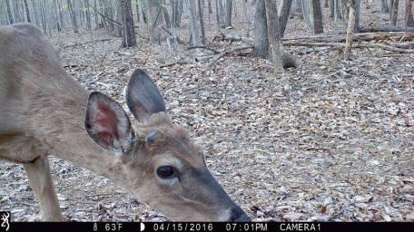 game_camera_deer2